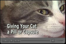 Giving Your Cat a Pill or capsule